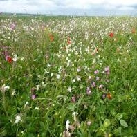 Nectar Flower Mixture fra Bright Seeds 0,5 ha./pose